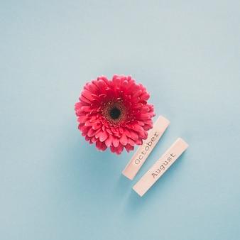 Цветок герберы с октябрьскими и августовскими надписями на бумагах