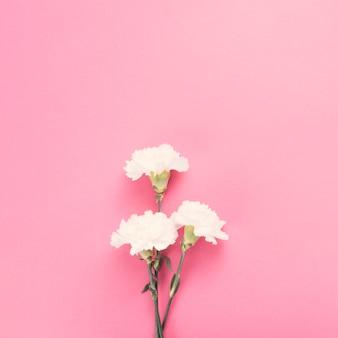 Цветы гвоздики на розовом столе