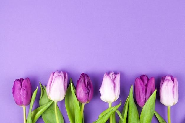 紫色の表面上の行に配置された春の美しいチューリップ
