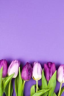紫色の背景上の新鮮な春のチューリップの花の上から見る