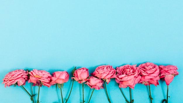 ターコイズブルーの背景の上の行にピンクの花のアレンジメント