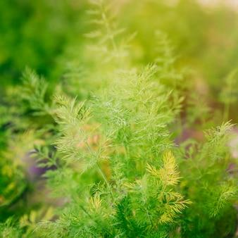 春の緑の植物の背景