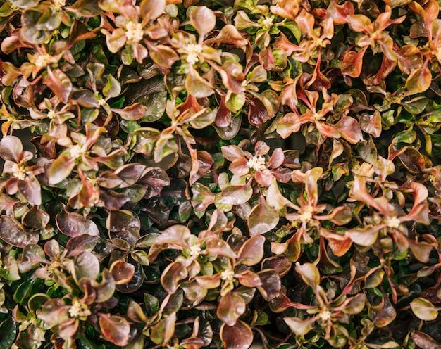 小さな花と茶色の新鮮な葉のクローズアップ