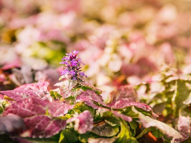 晴れた日に赤い葉が咲く紫色の花