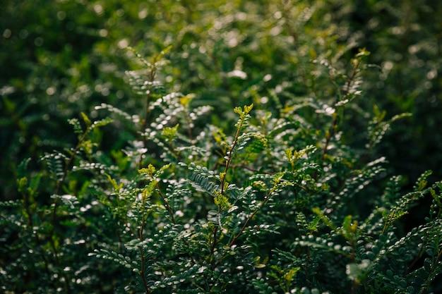 緑の葉の背景のクローズアップ