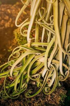 Крупный план зеленых листьев скручиваемости