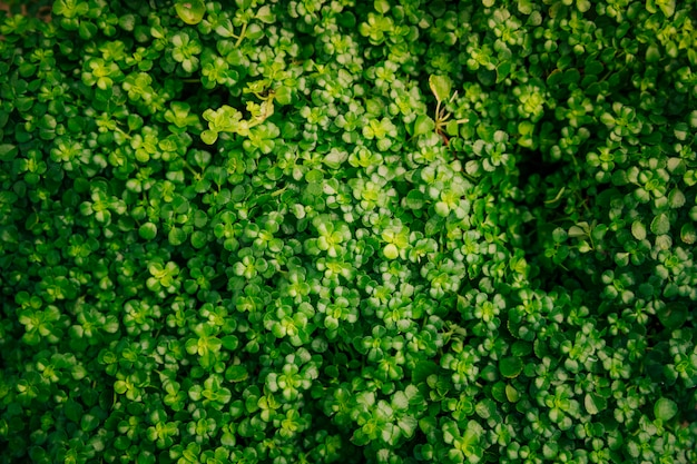 小さな緑の葉の背景のフルフレーム