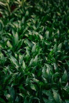 Полный кадр фона зеленых листьев