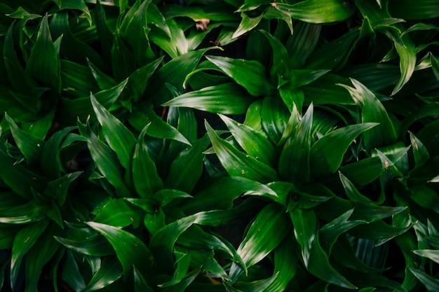 Возвышенный вид на фоне зеленых листьев