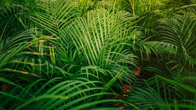 熱帯のヤシの葉のシームレスなパターン背景