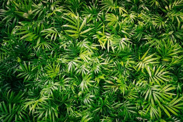 Фон из весенних растений с зелеными листьями