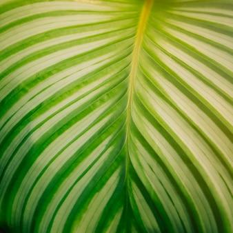 縞模様と緑の葉の対称