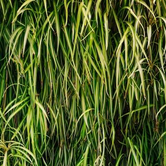 Крупный план декоративных трав