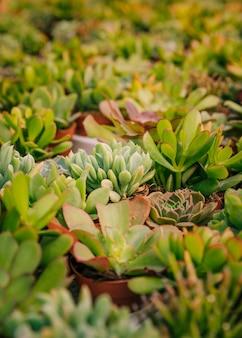 Коллекция различных кактусов и суккулентов в горшках