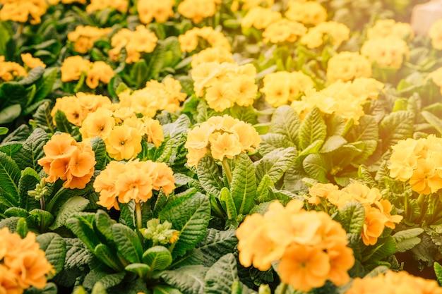黄色い花を持つ自然な夏の背景