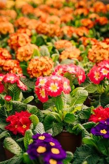 庭の色とりどりの美しい花のクローズアップ