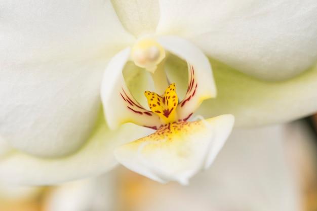 Красивый желтый свежий лепесток белого цветка