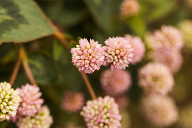 Красивые розовые свежие цветы