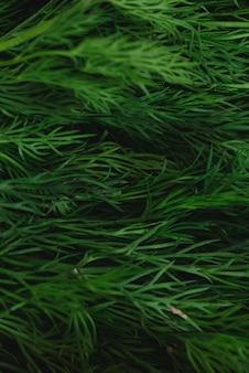 緑の新鮮なディルの背景のフルフレーム