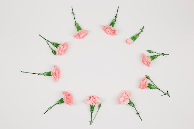 白い背景で隔離円形のカーネーションの花のフレーム