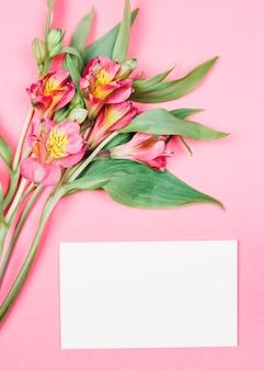 ピンクの背景の空白の白いカードの近くの芽と新鮮な美しいアルストロメリアの花のクローズアップ