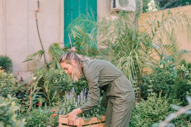 植物園でラベンダーの花の箱を運ぶ女性庭師