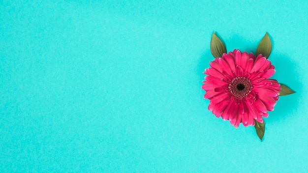 ガーベラの花、青いテーブル