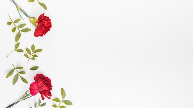 テーブルの上の葉を持つ赤いカーネーションの花
