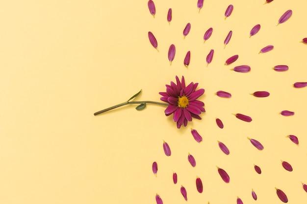 テーブルの上の花びらとピンクの花