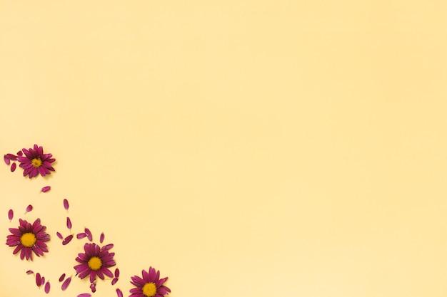 黄色のテーブルの上の花びらとピンクの花