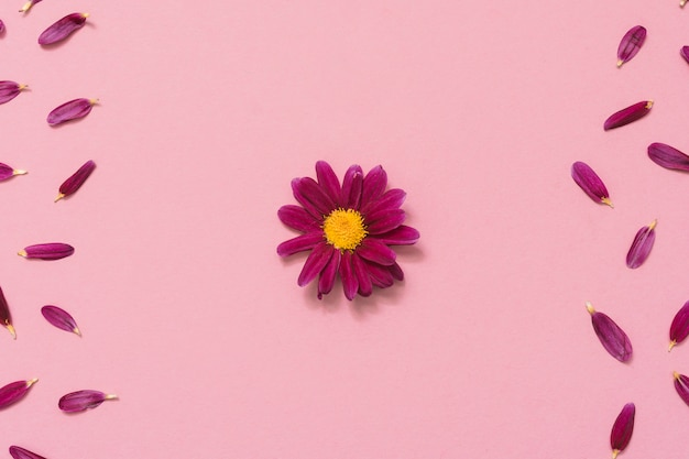 ピンクのテーブルの上に花びらを持つ小さな花