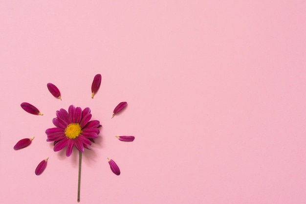 テーブルの上の花びらを持つ小さな花