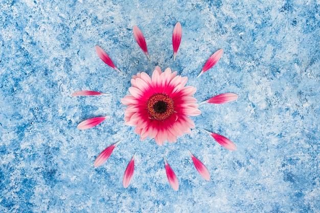 テーブルの上の花びらとピンクのガーベラの花