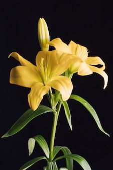 Красивые свежие цветы на зеленой ветке