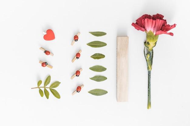 テーブルの上の緑の葉とカーネーションの花