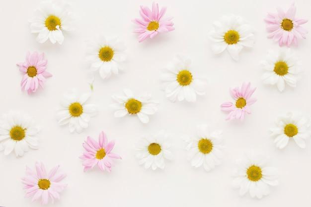 Композиция из множества цветочных бутонов ромашки
