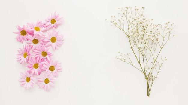 Куча розовых ромашек возле веточки растения