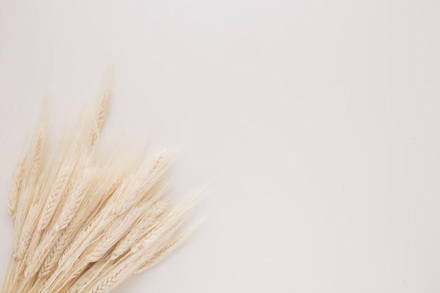 多くの小麦の小枝の束