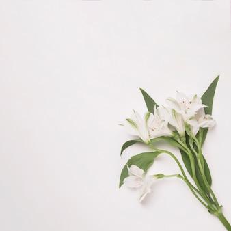 緑の葉が付いている茎の上に花の束