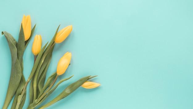 青いテーブルの上の黄色いチューリップ