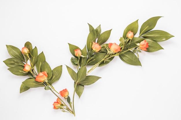 白いテーブルの上の緑の葉とバラの花