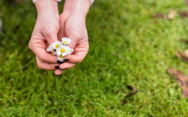 土地の芝生の近くの小さな白い花を持つ女性