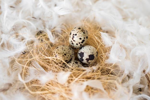 羽の羽の間の干し草にウズラの卵
