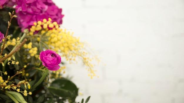 黄色のミモザと白い背景に対してピンクのバラのクローズアップ