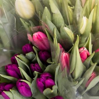 新鮮な白のクローズアップ。紫とピンクのチューリップの花の花束