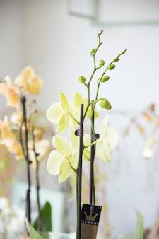 Крупный план экзотического цветка орхидеи с бутонами