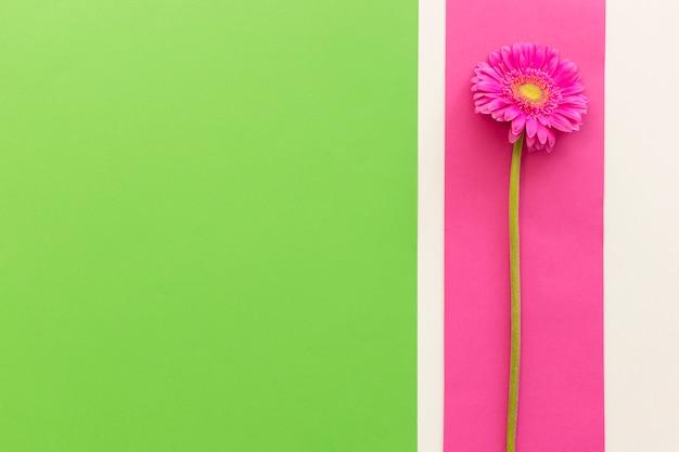 背景に単一のピンクのガーベラの立面図