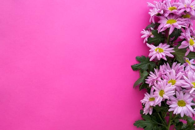Высокий угол обзора цветы ромашки на розовом фоне