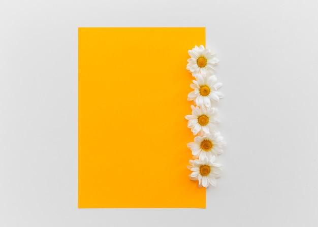 Оранжевый чистый лист бумаги с цветами ромашки выше на белом фоне