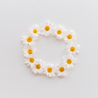 Вид сверху красивых цветов ромашки, расположенных на круглой формы на белом фоне